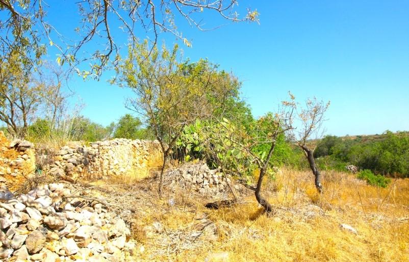 Ruinas com 20.050 m2 de Terreno